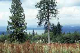 Cougar Mountain Regional Wildlife Park, Aug 1994 (ref ID 467.2.24)